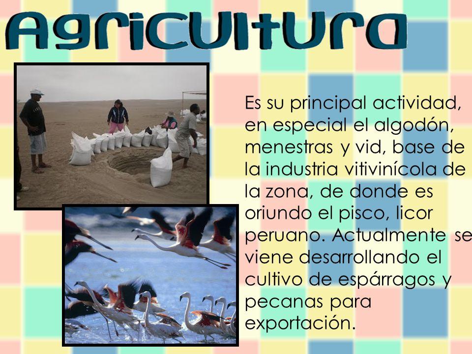 Es su principal actividad, en especial el algodón, menestras y vid, base de la industria vitivinícola de la zona, de donde es oriundo el pisco, licor peruano.