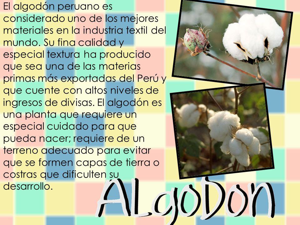 Sus características, han convertido al algodón peruano, en el material por excelencia pues es fácil de llevar, suave en el contacto con la piel, es resistente, tiene un buen poder de absorción y es de fácil lavado.
