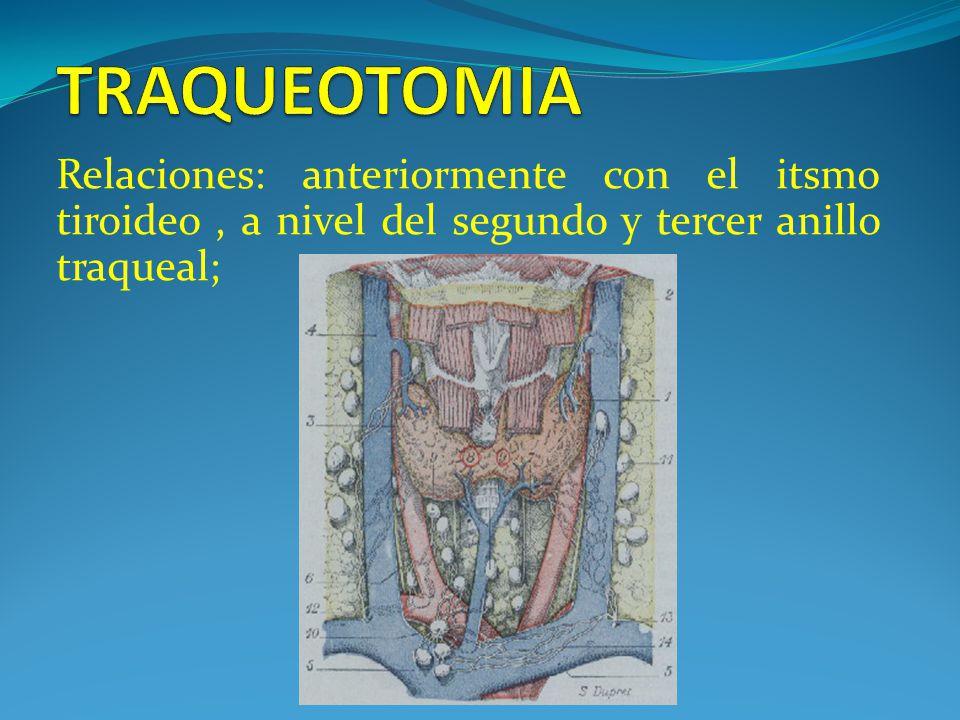 Relaciones: anteriormente con el itsmo tiroideo, a nivel del segundo y tercer anillo traqueal;