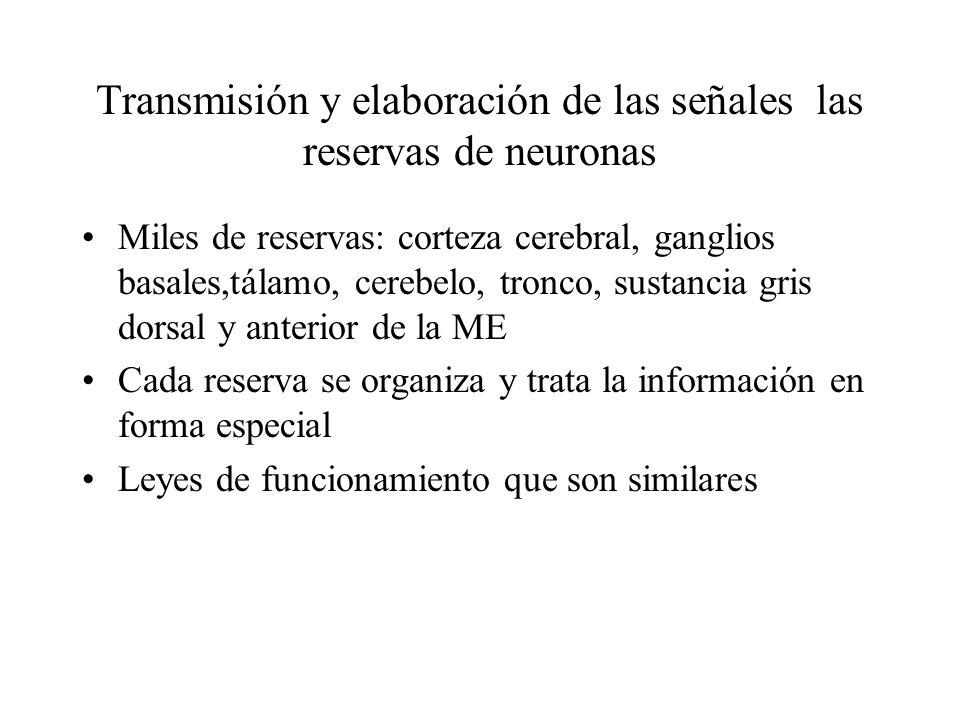 Transmisión y elaboración de las señales las reservas de neuronas Miles de reservas: corteza cerebral, ganglios basales,tálamo, cerebelo, tronco, sust