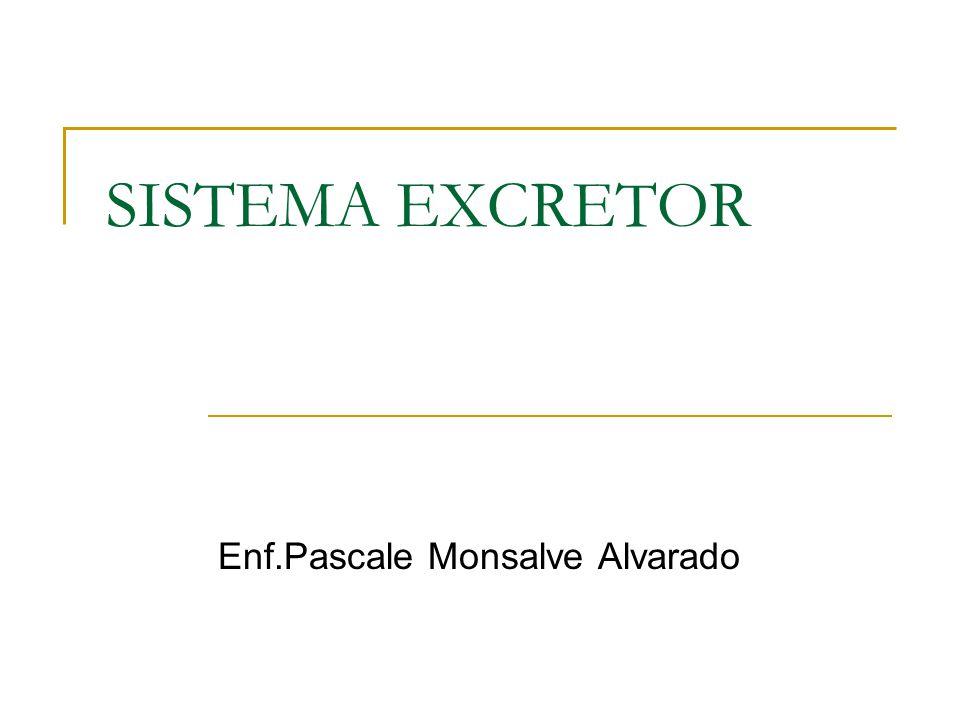 SISTEMA EXCRETOR Enf.Pascale Monsalve Alvarado