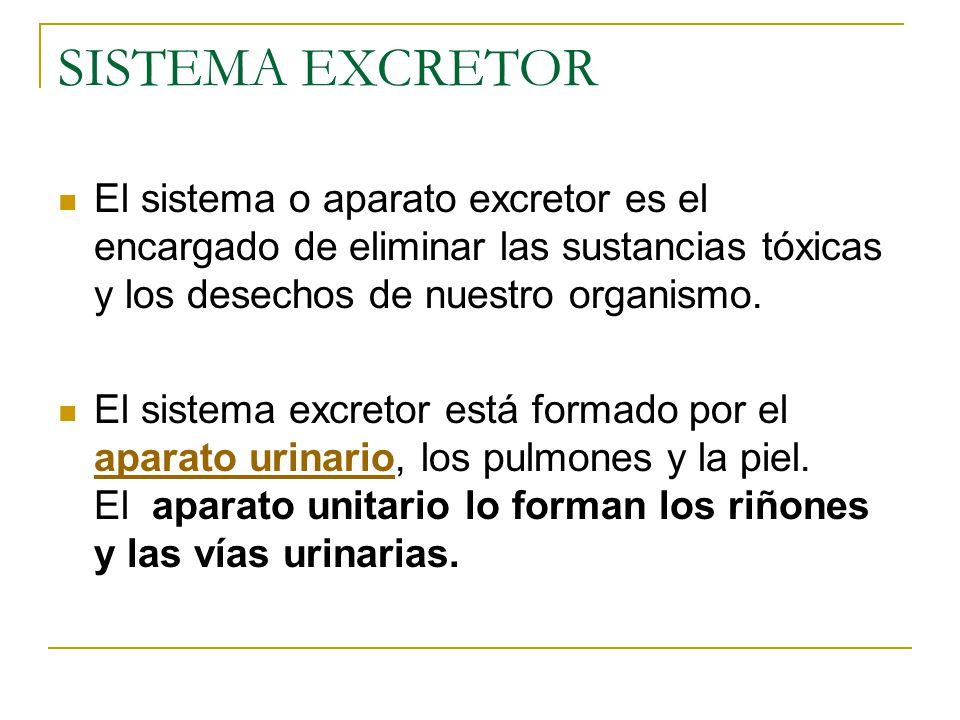 SISTEMA EXCRETOR El sistema o aparato excretor es el encargado de eliminar las sustancias tóxicas y los desechos de nuestro organismo.