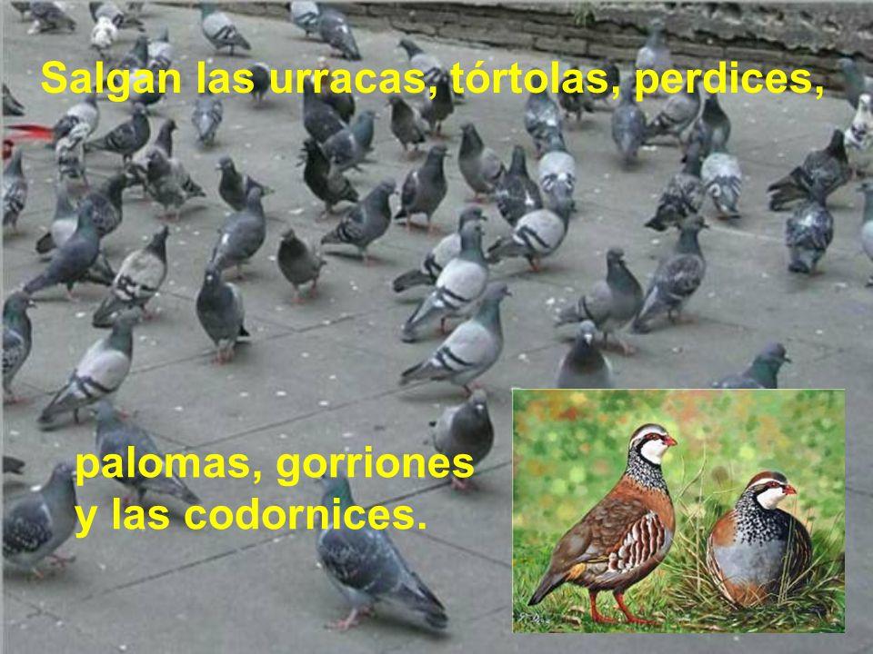 Salgan cigüeñas con orden, águilas. grullas y garzas, avutardas, gavilanes, lechuzas, mochuelos, grajas;