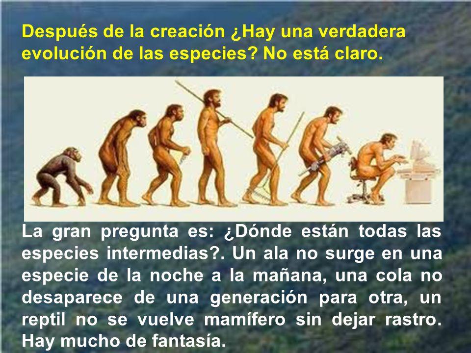 la creación del hombre y de la mujer viene en último lugar, como culminando toda la obra creadora; al ser humano se le encomienda someter y dominar la