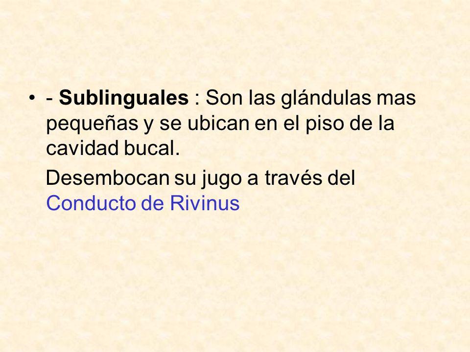 - Sublinguales : Son las glándulas mas pequeñas y se ubican en el piso de la cavidad bucal.