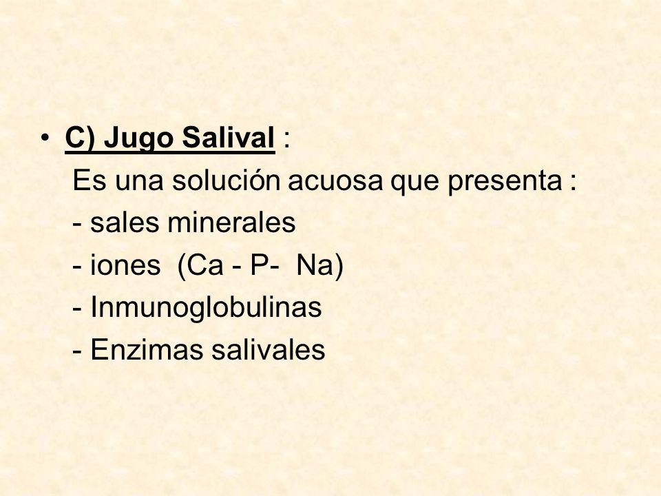 Hay 3 tipos de enzimas salivales : 1.- Amilasa salival que hidroliza el almidón en maltosa 2.- Lipasa lingual que desdobla lípidos de la leche.