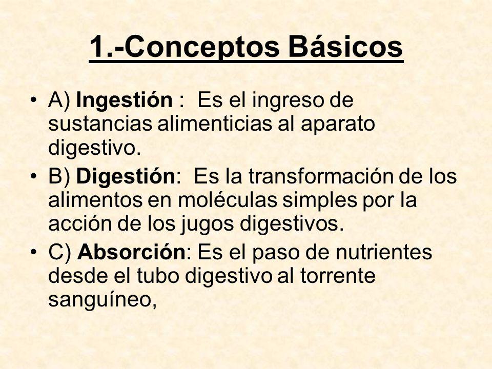 D) Egestion : es el proceso por el cual se eliminan aquellas sustancias alimenticias que no han sido digeridas.