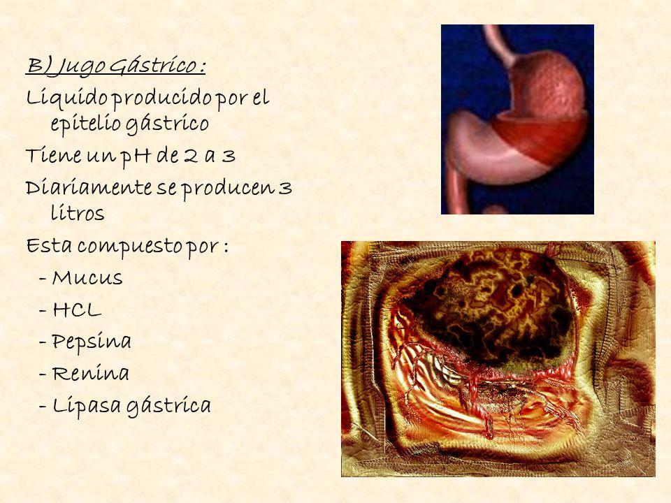 Mucus : Producido por células caliciformes se encarga de proteger las paredes del estomago del HCl Acido Clorhídrico : - Es producido por las células parietales del antro - Determina ph del jugo gástrico - Aumenta superficie de absorción de las proteínas.