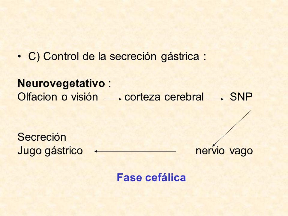 Endocrino : Presencia bolo células G del antro en estomago Secreción gástrica Gastrina Fase Gástrica