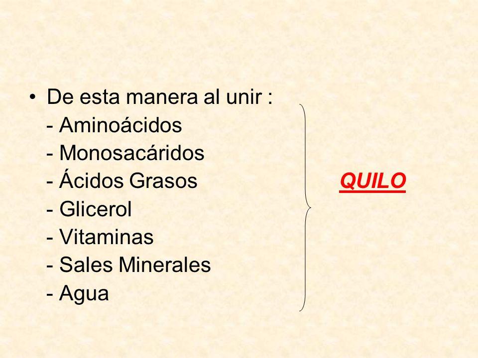 De esta manera al unir : - Aminoácidos - Monosacáridos - Ácidos Grasos QUILO - Glicerol - Vitaminas - Sales Minerales - Agua