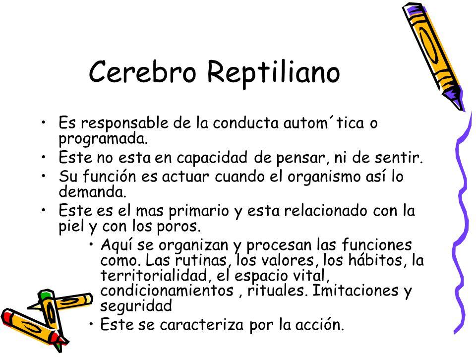 Cerebro Reptiliano Es responsable de la conducta autom´tica o programada.