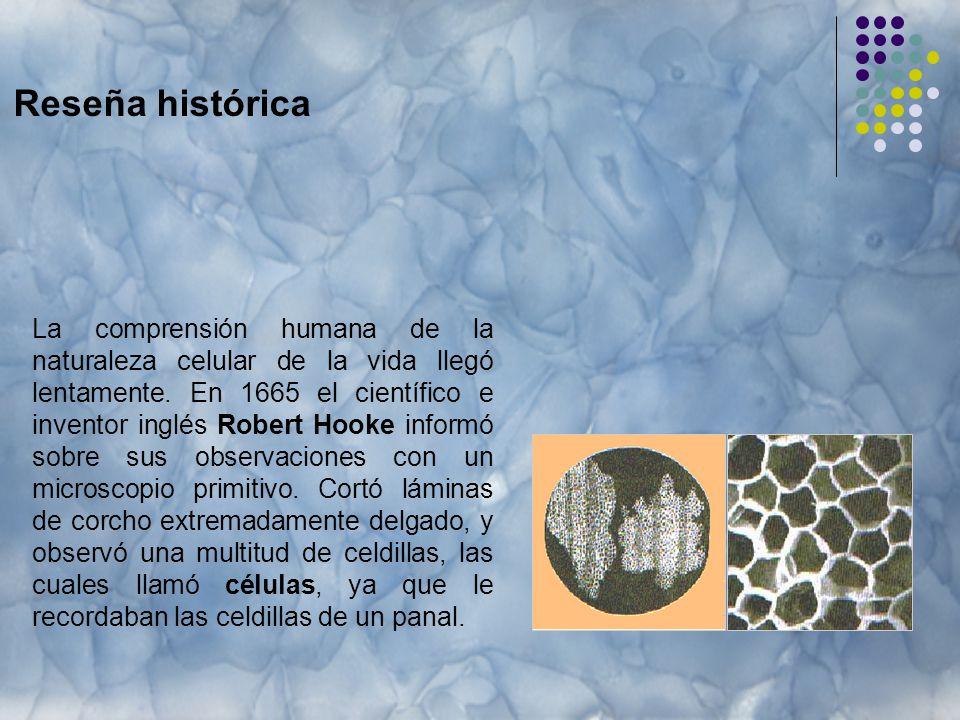 Reseña histórica La comprensión humana de la naturaleza celular de la vida llegó lentamente.