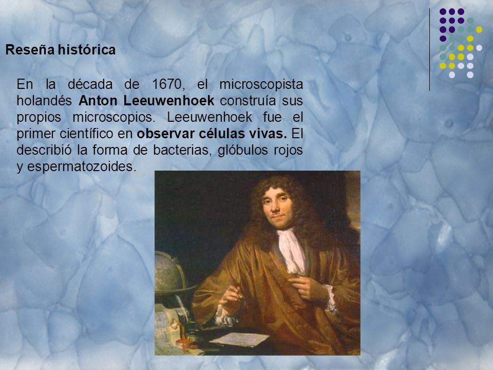 Reseña histórica En la década de 1670, el microscopista holandés Anton Leeuwenhoek construía sus propios microscopios.