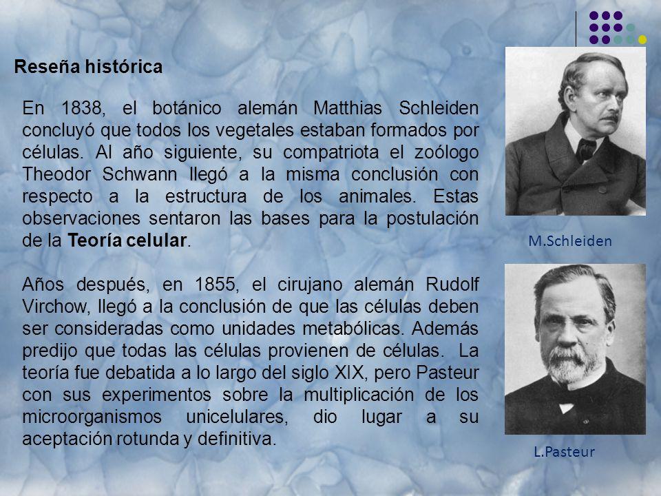 Reseña histórica En 1838, el botánico alemán Matthias Schleiden concluyó que todos los vegetales estaban formados por células.