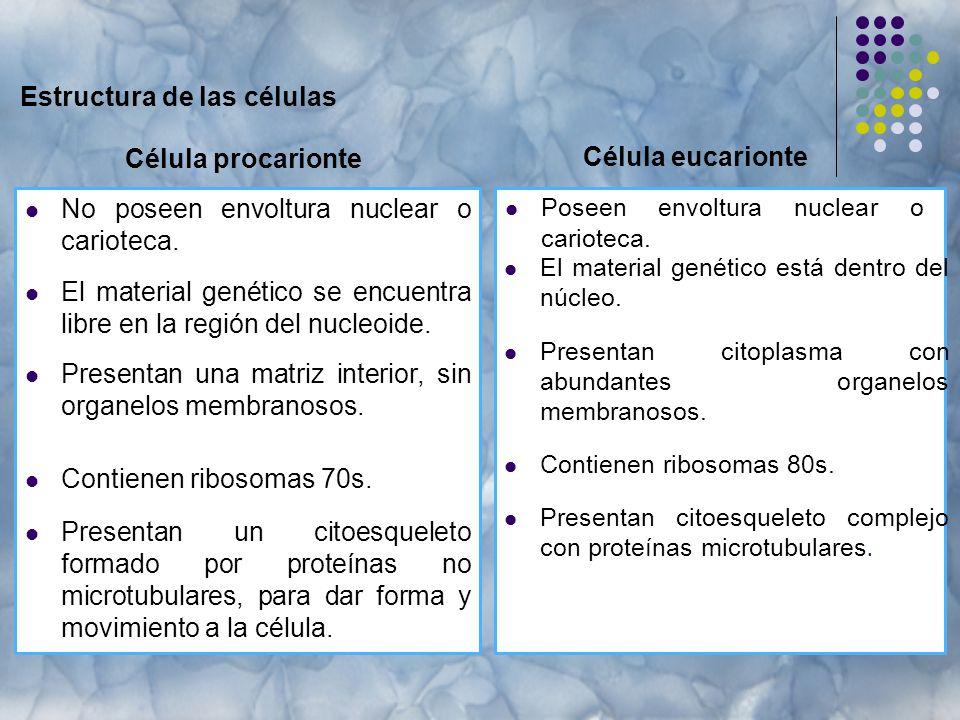Estructura de las células Célula procarionte No poseen envoltura nuclear o carioteca.