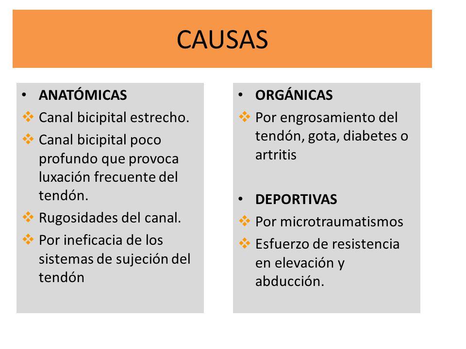 CAUSAS ANATÓMICAS Canal bicipital estrecho. Canal bicipital poco profundo que provoca luxación frecuente del tendón. Rugosidades del canal. Por inefic