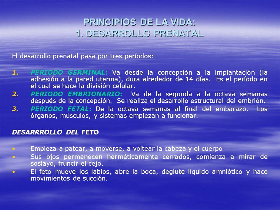 PRINCIPIOS DE LA VIDA: 1.DESARROLLO PRENATAL El desarrollo prenatal pasa por tres períodos: 1.