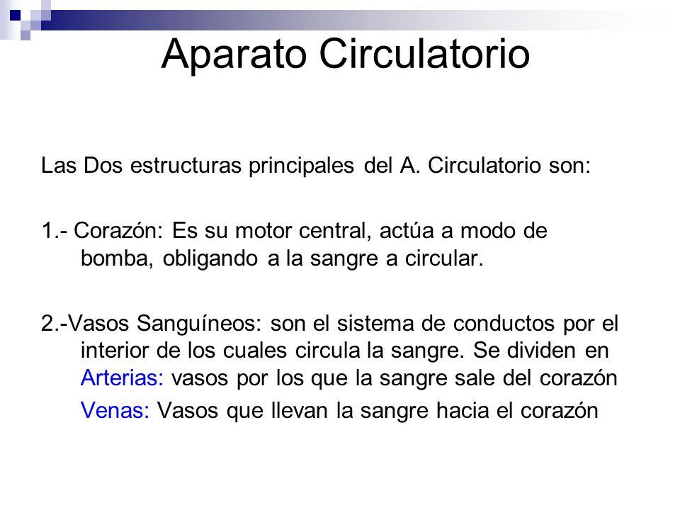 Aparato Circulatorio Las Dos estructuras principales del A. Circulatorio son: 1.- Corazón: Es su motor central, actúa a modo de bomba, obligando a la