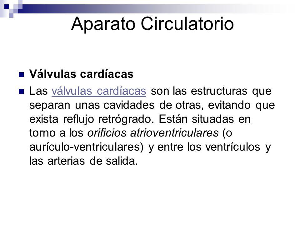 Aparato Circulatorio Válvulas cardíacas Las válvulas cardíacas son las estructuras que separan unas cavidades de otras, evitando que exista reflujo re