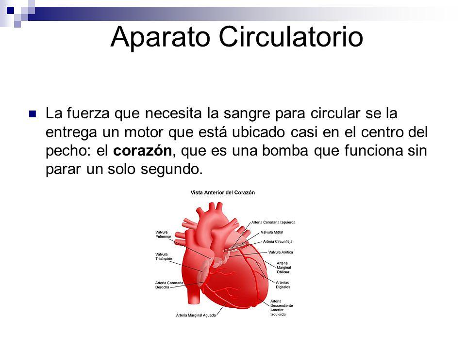 Aparato Circulatorio La fuerza que necesita la sangre para circular se la entrega un motor que está ubicado casi en el centro del pecho: el corazón, q