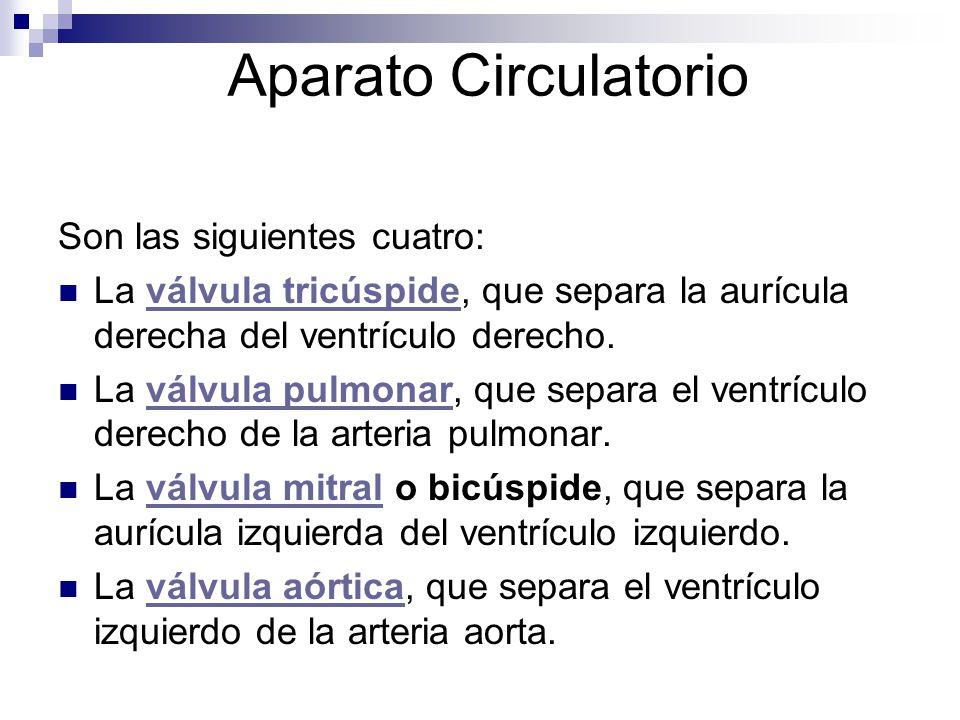 Aparato Circulatorio Son las siguientes cuatro: La válvula tricúspide, que separa la aurícula derecha del ventrículo derecho.válvula tricúspide La vál