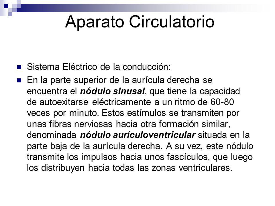 Aparato Circulatorio Sistema Eléctrico de la conducción: En la parte superior de la aurícula derecha se encuentra el nódulo sinusal, que tiene la capa