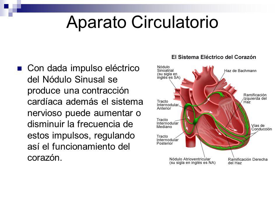 Aparato Circulatorio Con dada impulso eléctrico del Nódulo Sinusal se produce una contracción cardíaca además el sistema nervioso puede aumentar o dis