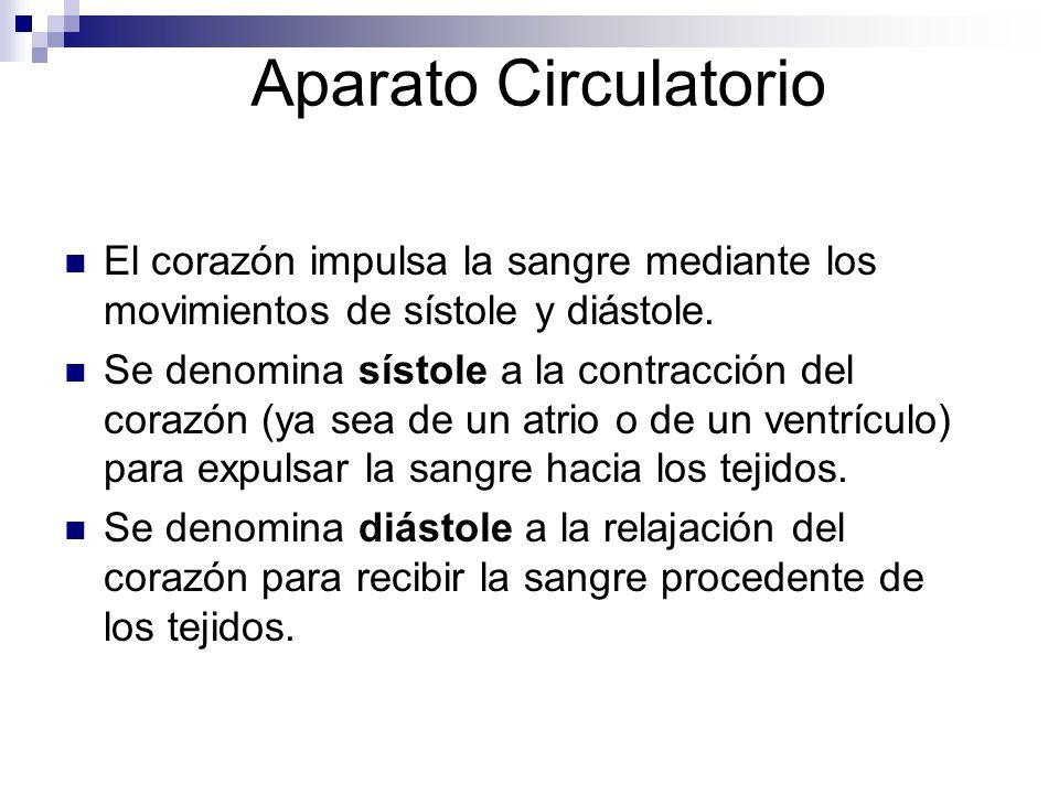Aparato Circulatorio El corazón impulsa la sangre mediante los movimientos de sístole y diástole. Se denomina sístole a la contracción del corazón (ya