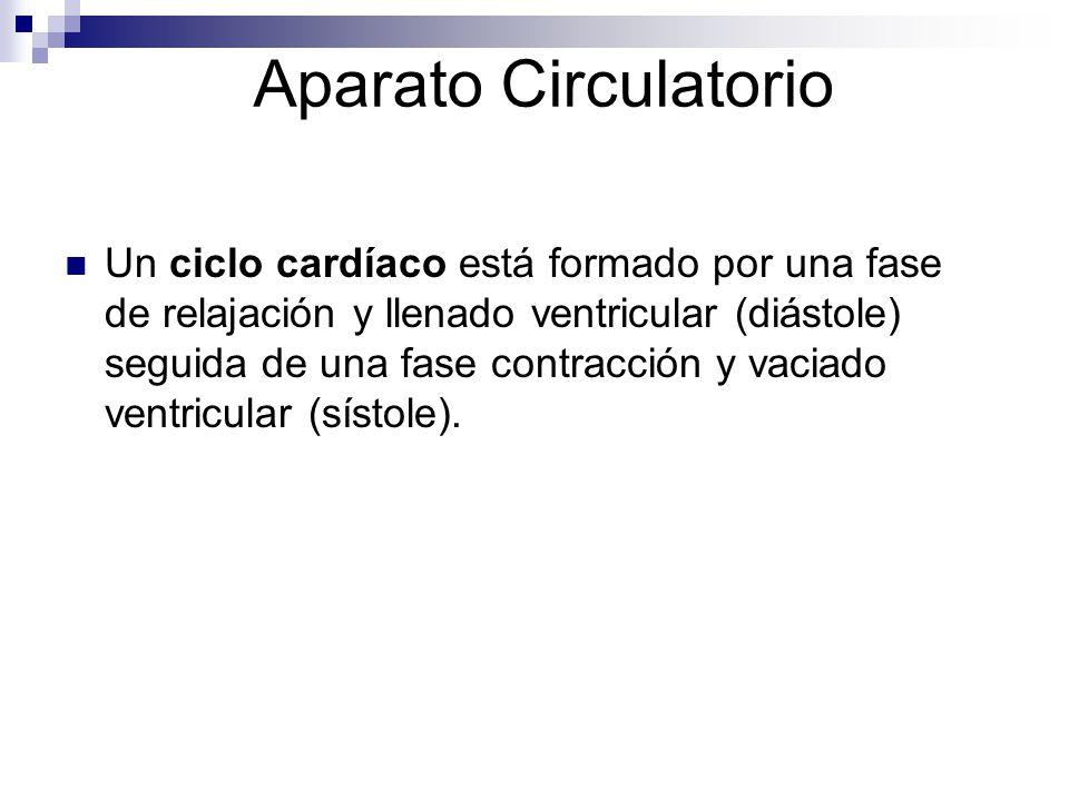 Aparato Circulatorio Un ciclo cardíaco está formado por una fase de relajación y llenado ventricular (diástole) seguida de una fase contracción y vaci
