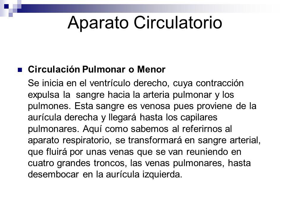 Aparato Circulatorio Circulación Pulmonar o Menor Se inicia en el ventrículo derecho, cuya contracción expulsa la sangre hacia la arteria pulmonar y l