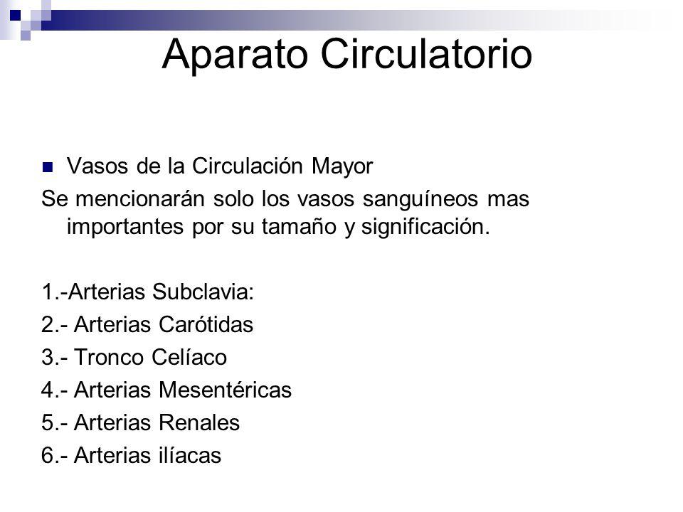 Aparato Circulatorio Vasos de la Circulación Mayor Se mencionarán solo los vasos sanguíneos mas importantes por su tamaño y significación. 1.-Arterias