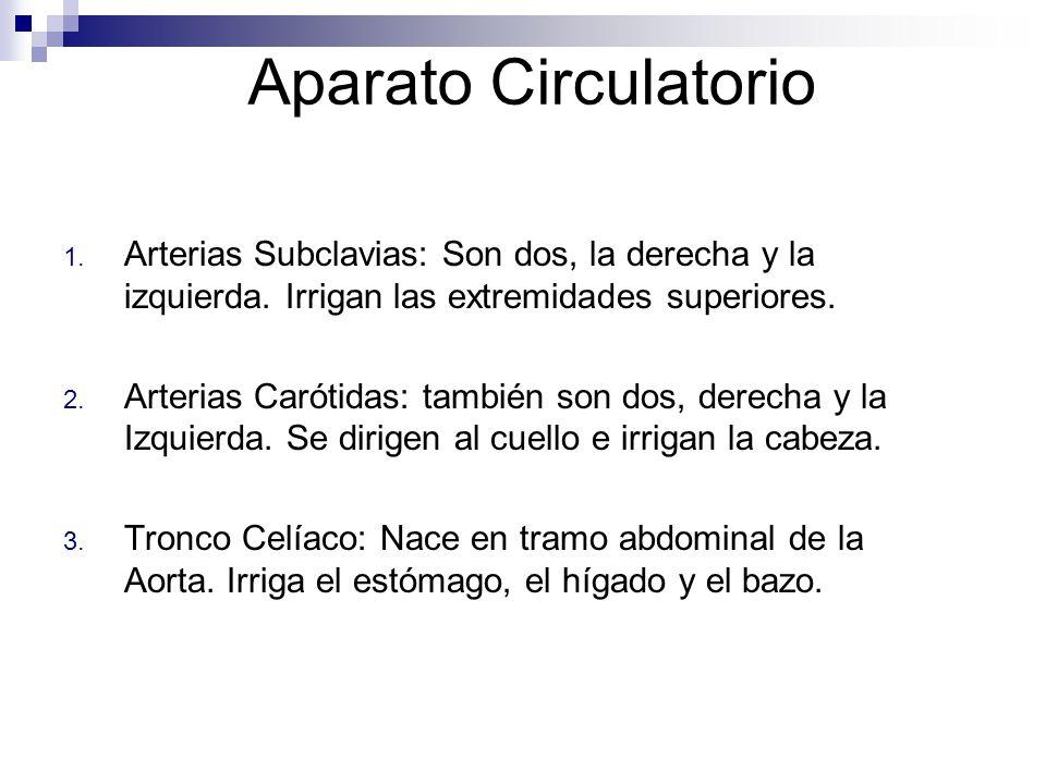 Aparato Circulatorio 1. Arterias Subclavias: Son dos, la derecha y la izquierda. Irrigan las extremidades superiores. 2. Arterias Carótidas: también s