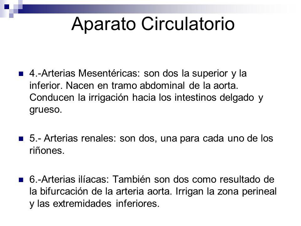 Aparato Circulatorio 4.-Arterias Mesentéricas: son dos la superior y la inferior. Nacen en tramo abdominal de la aorta. Conducen la irrigación hacia l