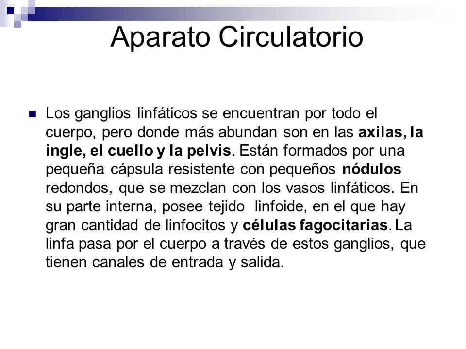 Aparato Circulatorio Los ganglios linfáticos se encuentran por todo el cuerpo, pero donde más abundan son en las axilas, la ingle, el cuello y la pelv