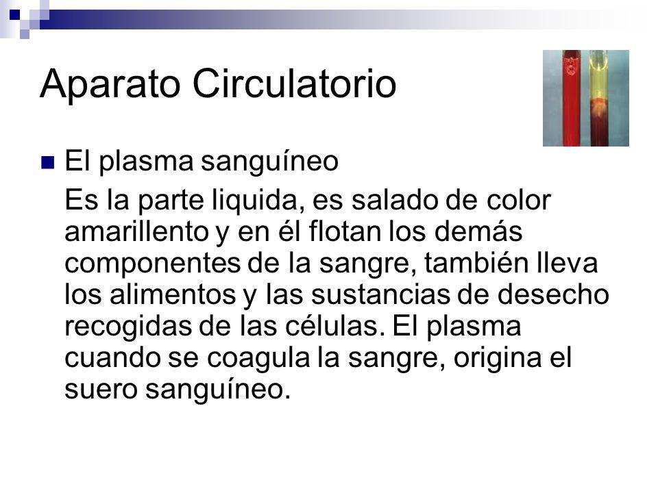 Aparato Circulatorio El plasma sanguíneo Es la parte liquida, es salado de color amarillento y en él flotan los demás componentes de la sangre, tambié