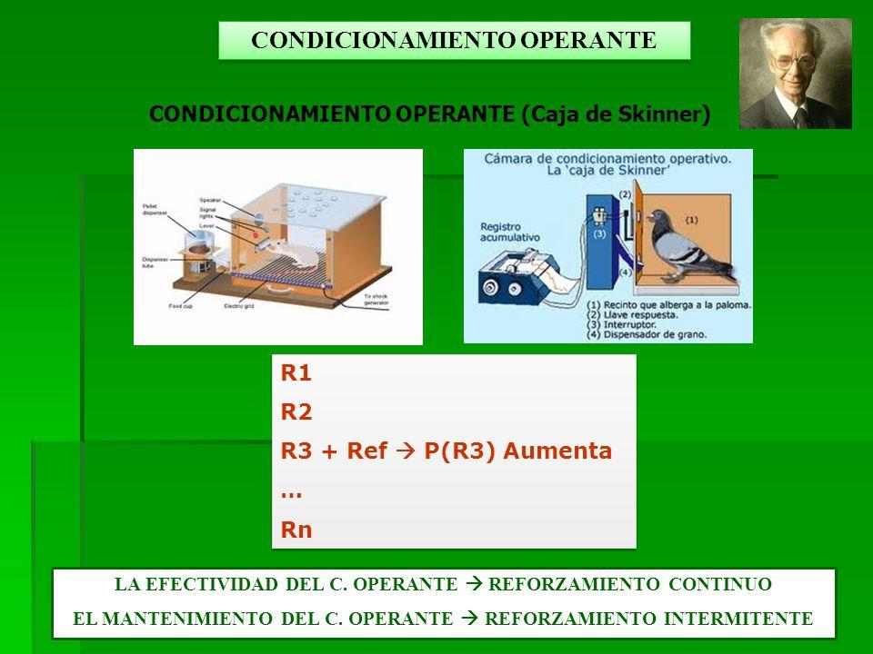 CONDICIONAMIENTO OPERANTE (Caja de Skinner) R1 R2 R3 + Ref P(R3) Aumenta … Rn R1 R2 R3 + Ref P(R3) Aumenta … Rn CONDICIONAMIENTO OPERANTE LA EFECTIVIDAD DEL C.