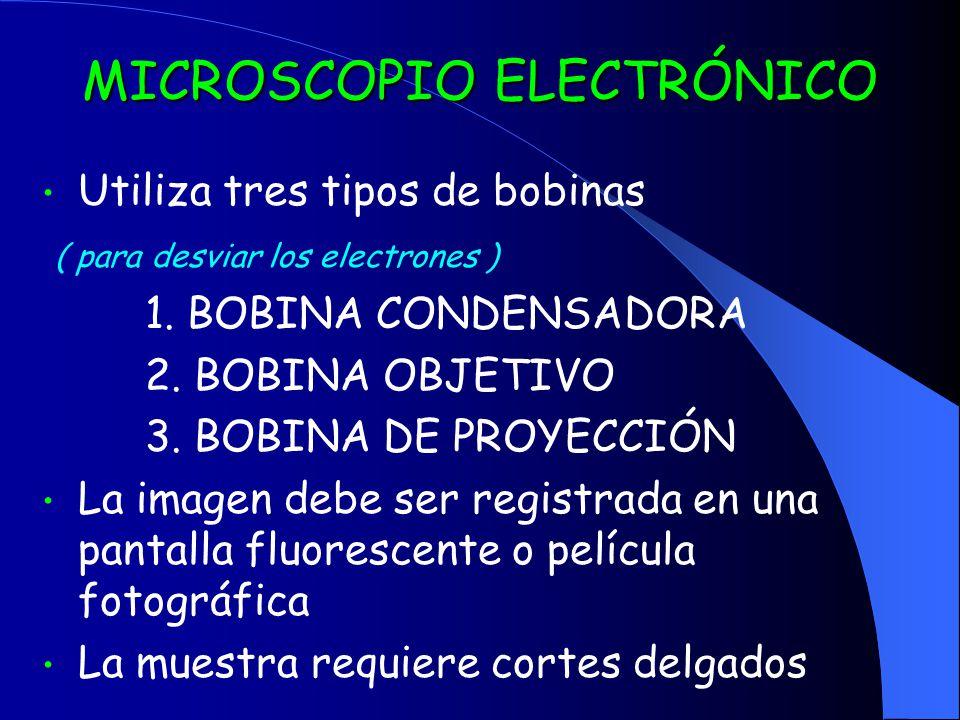 MICROSCOPIO ELECTRÓNICO Utiliza tres tipos de bobinas ( para desviar los electrones ) 1. BOBINA CONDENSADORA 2. BOBINA OBJETIVO 3. BOBINA DE PROYECCIÓ