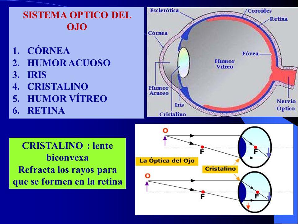 SISTEMA OPTICO DEL OJO 1.CÓRNEA 2.HUMOR ACUOSO 3.IRIS 4.CRISTALINO 5.HUMOR VÍTREO 6.RETINA CRISTALINO : lente biconvexa Refracta los rayos para que se formen en la retina