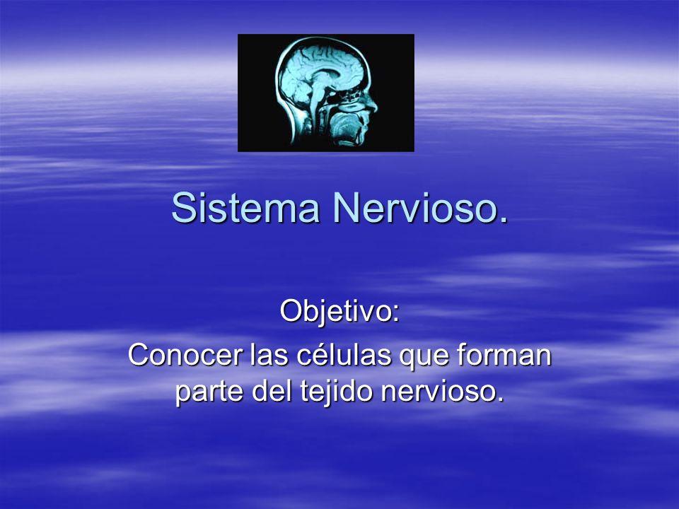 Sistema Nervioso. Objetivo: Conocer las células que forman parte del tejido nervioso.