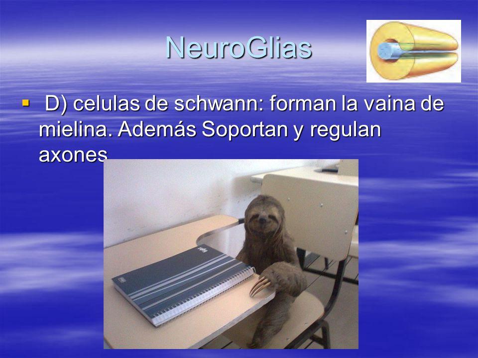 NeuroGlias D) celulas de schwann: forman la vaina de mielina. Además Soportan y regulan axones. D) celulas de schwann: forman la vaina de mielina. Ade