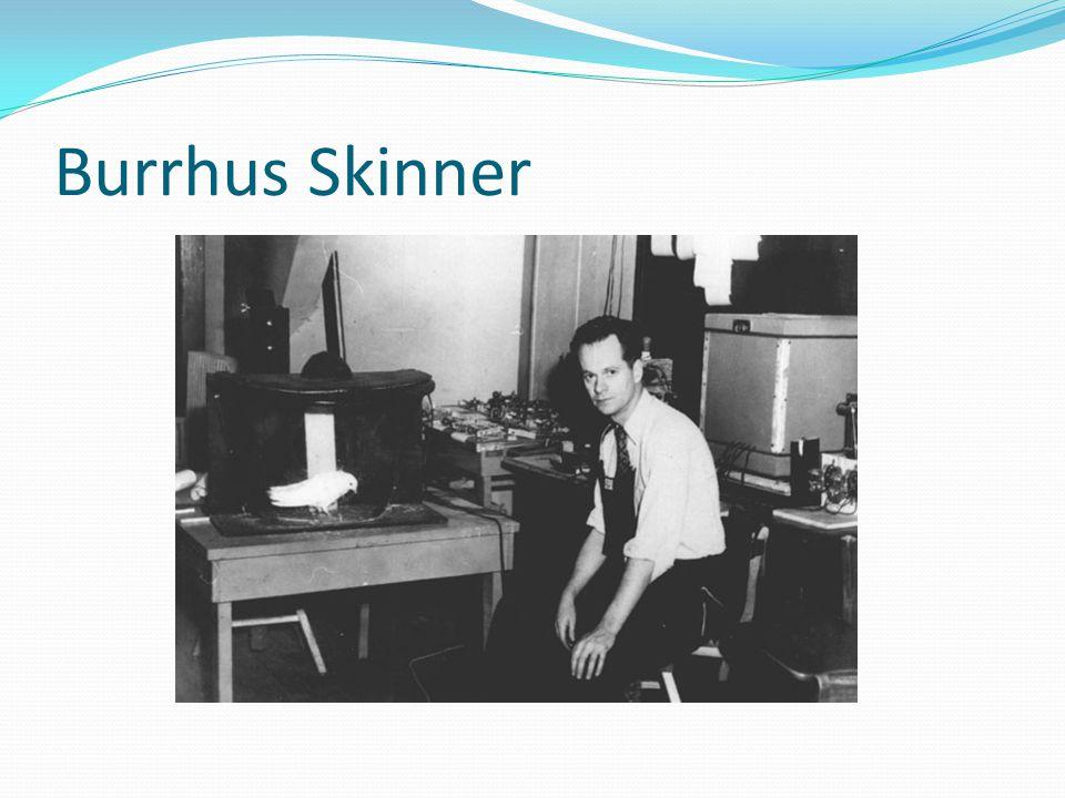 Caja de Skinner