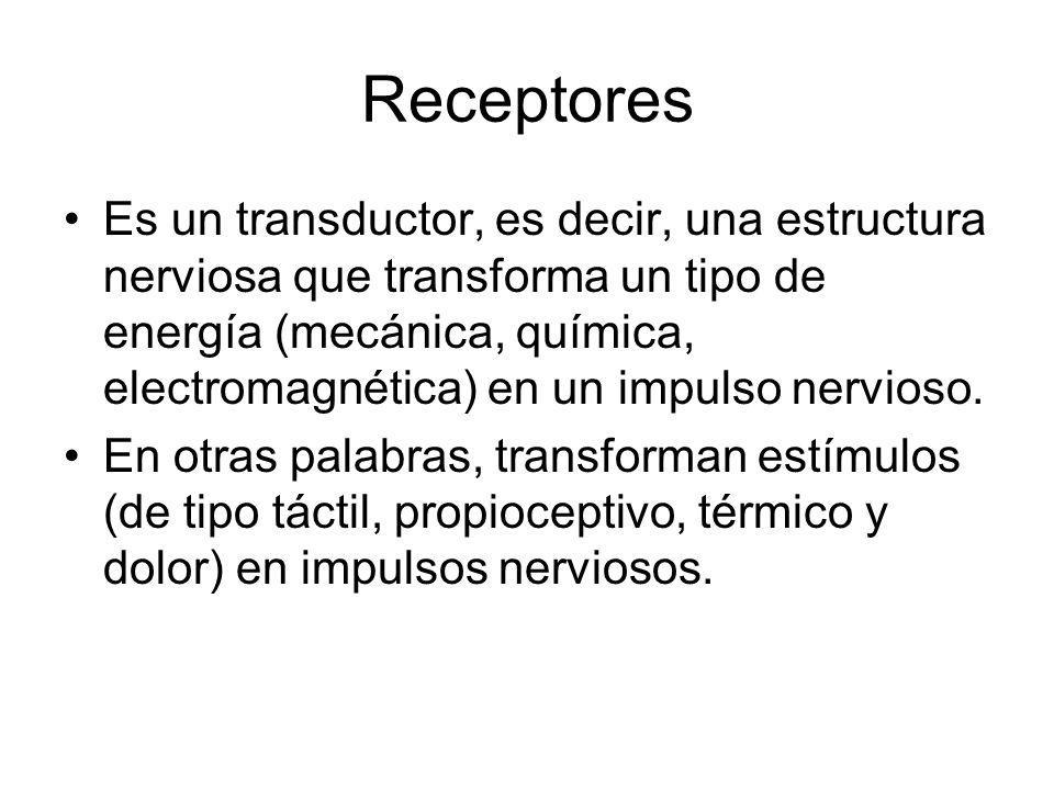 Receptores Es un transductor, es decir, una estructura nerviosa que transforma un tipo de energía (mecánica, química, electromagnética) en un impulso