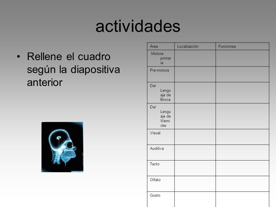actividades Rellene el cuadro según la diapositiva anterior ÁreaLocalizaciónFunciones Motora primar ia Pre-motora Del Lengu aje de Broca Del Lengu aje