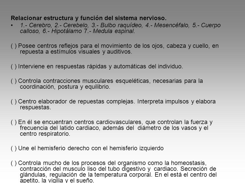 Relacionar estructura y función del sistema nervioso. 1.- Cerebro, 2.- Cerebelo, 3.- Bulbo raquídeo, 4.- Mesencéfalo, 5.- Cuerpo calloso, 6.- Hipotála