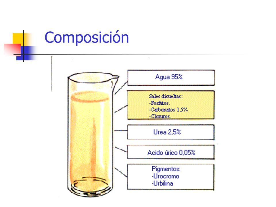 Las alteraciones en la función renal o sistémica: alteraciones en la orina.