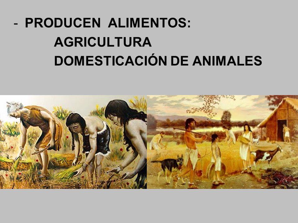 -PRODUCEN ALIMENTOS: AGRICULTURA DOMESTICACIÓN DE ANIMALES