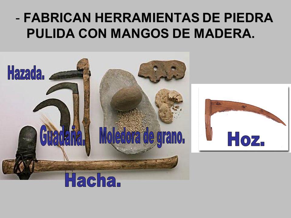 - FABRICAN HERRAMIENTAS DE PIEDRA PULIDA CON MANGOS DE MADERA.
