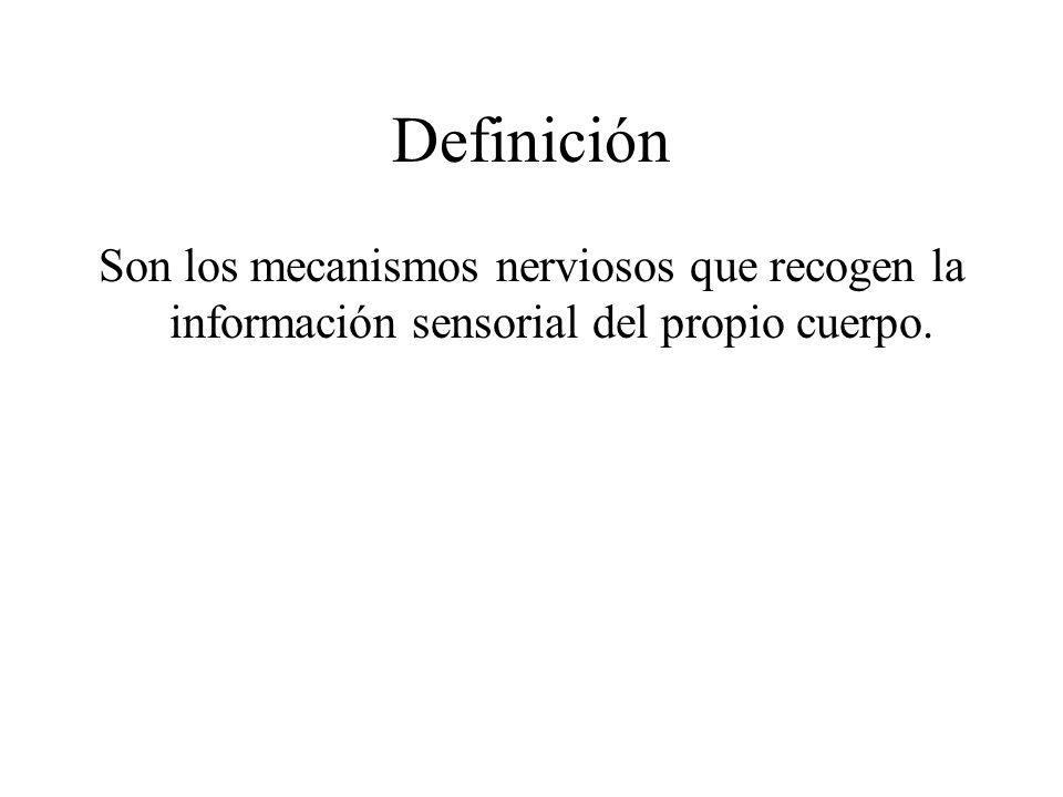Definición Son los mecanismos nerviosos que recogen la información sensorial del propio cuerpo.