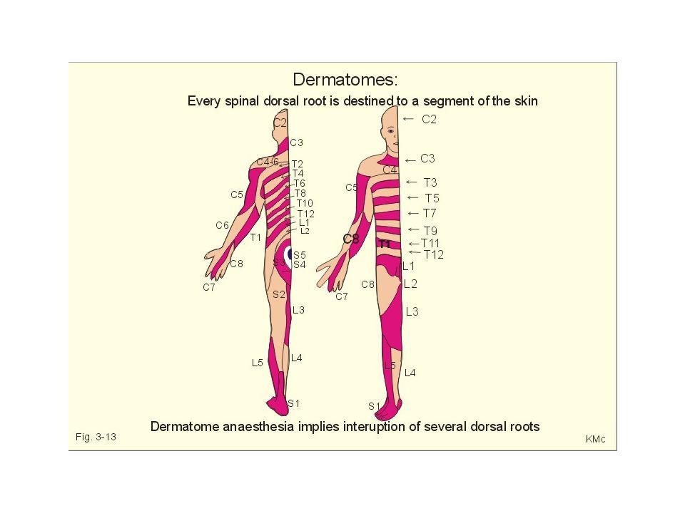 La corteza sensorial Contiene enormes cantidades de columnas verticales de neuronas y cada una de ellas detectan una modalidad sensorial específica en