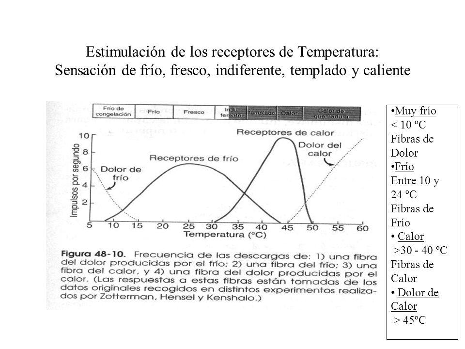 Sensaciones de temperatura Receptores Térmicos y su excitación –De frío de congelación al calor de quemadura –Tres receptores sensoriales: del calor,